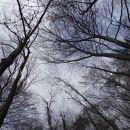 kupola dreves nad izvirom