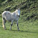 beli konj brez princa