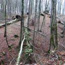 posledice snegoloma v gozdu pod velikim cirnikom