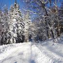 hoja v zimsko pravljico