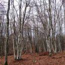 gozd panjevec vztrajno zarašča nekoč kultivirano krajino