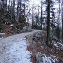 udoben vzpon po gozdni cesti...