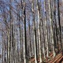 lep bukov gozd