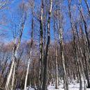 bukov gozd pozimi