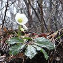 tukaj pomladno cvetje, pri nas še vse pod snegom...