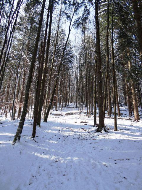 Na začetku poti še bolj malo snega