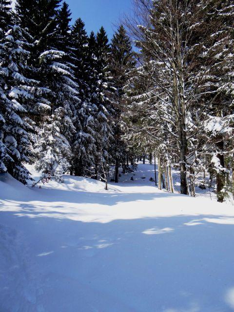 Tole pa je gozdna cesta
