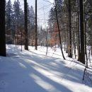 sončni žarki v gozdu