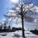drevo na vrhu