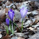pa je le pomlad