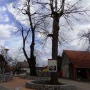 lepo urejeno središče vasi pri lipi v Gradežu
