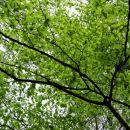 čez dan je gozd ozelenel