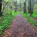 s čemažem prekrita gozdna tla