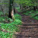 pogled nazaj, pot na sedlo je del borovške naravoslovne poti, ki je označena z narciso