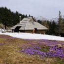 sneg in cvetje na dovji ravni
