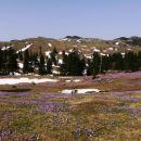 pogled z dovje ravni proti veliki planini