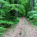 skozi gozd kremen najprej po napačnem kolovozu, nato udeneva pravega...