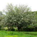 pomlad je v polnem cvetu
