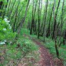 kraški gozd