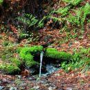 izvir v gozdu