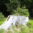 naravni teglc za zelenje
