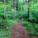 gozd po dežju