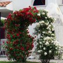 cvetoči portal
