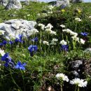na belski planini se prične cvetna promenada...