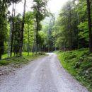 zložna hoja v senci gozda