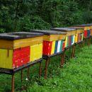 mimo čebeljih panjev