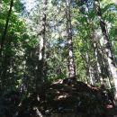 ogromen balvan na katerem raste drevje