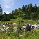 ostanki pastirskega stanu