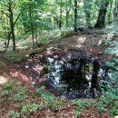 mlaka v gozdu