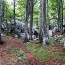 pod medvjeđim kukom se pot spusti skozi gozd do gozdne ceste