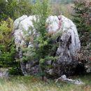 ogromen balvan na gozdni jasi