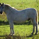 na polju je nekaj ograd s konji...