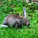 na kmetiji pri mali vodi imajo domače zajce prosto na paši