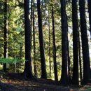 sonček ogreva gozd