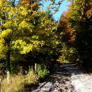 drevje se je odelo v jesenske barve