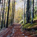 udobna hoja po gozdni cesti