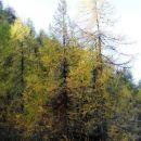 macesnovi gozdovi nad železnico