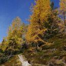 pot v zlati gozd