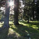 pozno popoldansko sonce v gozdu pod kofcami