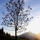 drevo in zahajajoče sonce nad matizovcem