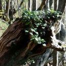 šopek v trhlem deblu
