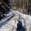 del poti po gozdni cesti, delno zasneženi