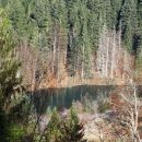 delček reškega jezera sredi gozdov