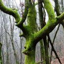 drevo, oblečeno v žamet