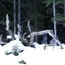 gozdne umetnine