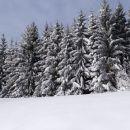 tale lep smrekov gozd je nastal s pogozdovanjem